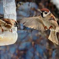 Кстати о птичках... Фото на память... :: Александр Резуненко