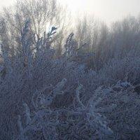 Морозное утро :: Наталья Гринченко