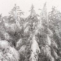 Зимний лес :: Елена Васильева