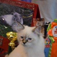 Котёнок. :: Oleg4618 Шутченко