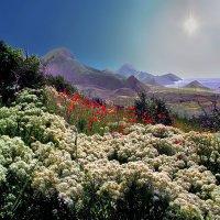 белый снег весенних цветочных склонов :: viton