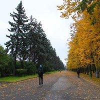 Золотая осень в Москве :: Елена Даньшина
