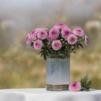 Маленькая розовая хризантема в стопочке :: Елена Ахромеева