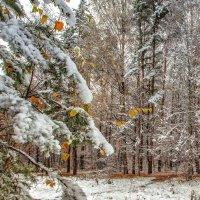Осень вокруг, одевается в зимнее... :: Александр Шамардин