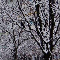 Птичка :: Нина Корешкова