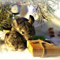Посылка от Деда Мороза: поделим по братски... :: Кай-8 (Ярослав) Забелин