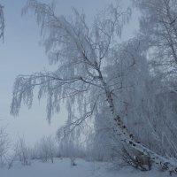 На фоне тумана :: Владимир Звягин