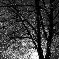 Зимний вечер :: Сергей Рубан