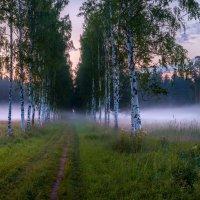 Прогуляться на заре по весенней берёзовой аллее. :: Фёдор. Лашков