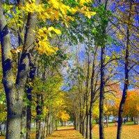 Осенняя аллея :: Leonid Tabakov