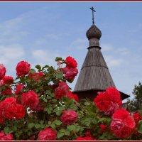Розы у церкви... :: анна нестерова