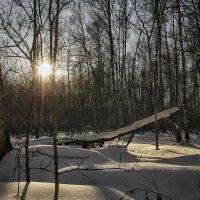 Лес неухоженный , обычный . :: Va-Dim ...