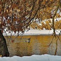 Зима :: Казимир Буйвис
