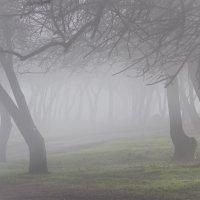 Туман :: Павел Коротун