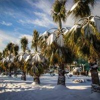 Пальмы в белом :: Evgenе Sochi