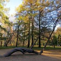 Парк осенью :: Вера Щукина