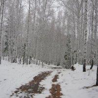 """Белый лес"" :: Оксана Волченкова"