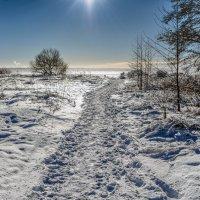 Тропинка к заливу :: Valeriy Piterskiy