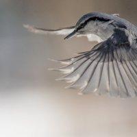Скоро весна , птицы оживились ! :: Евгений Ананевский