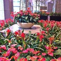 Цветник в  холле гостиницы. :: Виталий Селиванов
