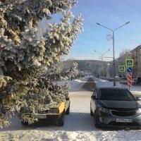 .... а кажется так тепло и солнечно :: Владимир Звягин