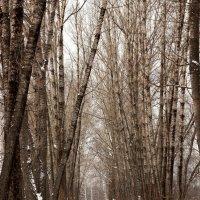 Деревья :: Дмитрий Арсеньев
