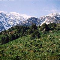 Южные склоны Гиссарского хребта,Памир :: tgtyjdrf