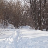 Одинокая тропа. :: Andrey S.
