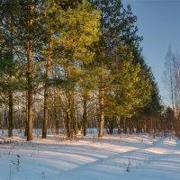 Зимний лес :: Александр Березуцкий (nevant60)