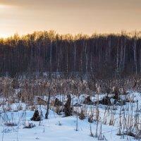 Зимнее болото. :: Владимир Лазарев