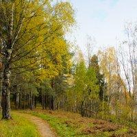 осень в лесу :: Сергей Кочнев