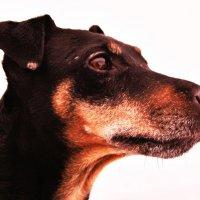 моя собака :: геннадий щербак