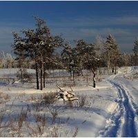 Сказки зимнего леса :: generalov545