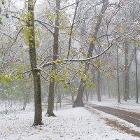 Снег в октябре :: Сергей Тарабара