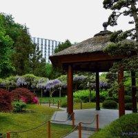 Парк цветов (серия). В японском саду :: Nina Yudicheva
