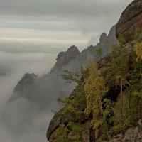Загадочный мир природы :: Сергей Герасимов