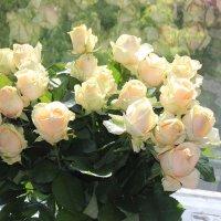 Розы юбилейные :: Виктор Шимолин