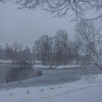 Снежный день :: Алёнка Шапран