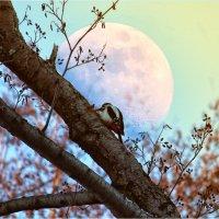 Под прикрытием луны.. :: Максим Минаков
