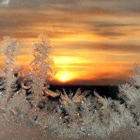 Морозное утро , -41 :: Юлия Лохова
