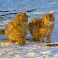 кошки у дорожки :: linnud