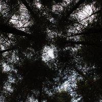 в чаще леса :: Кристина Волошина