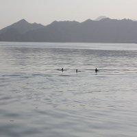оманский залив :: Сергей Тумарев