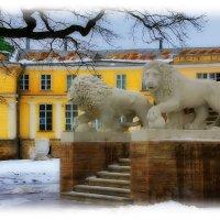 Приветствую вас. гривастые львы!!! :: Tatiana Markova