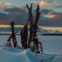 Зима :: Александр Березуцкий (nevant60)
