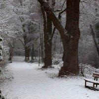 В зимнем парке тишина смеется И деревья тихие стоят . :: Юрий. Шмаков