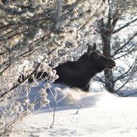 И в лесу не скрыться от фото-охотника... :: Сергей Стреляный