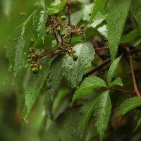 Summer Rain :: Michael Suokas