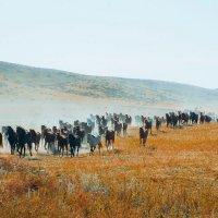 Перегон лошадей :: Артем Тыдыяков