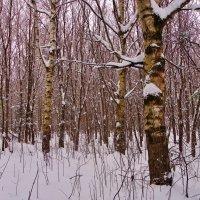 Тихо в лесу . :: Святец Вячеслав